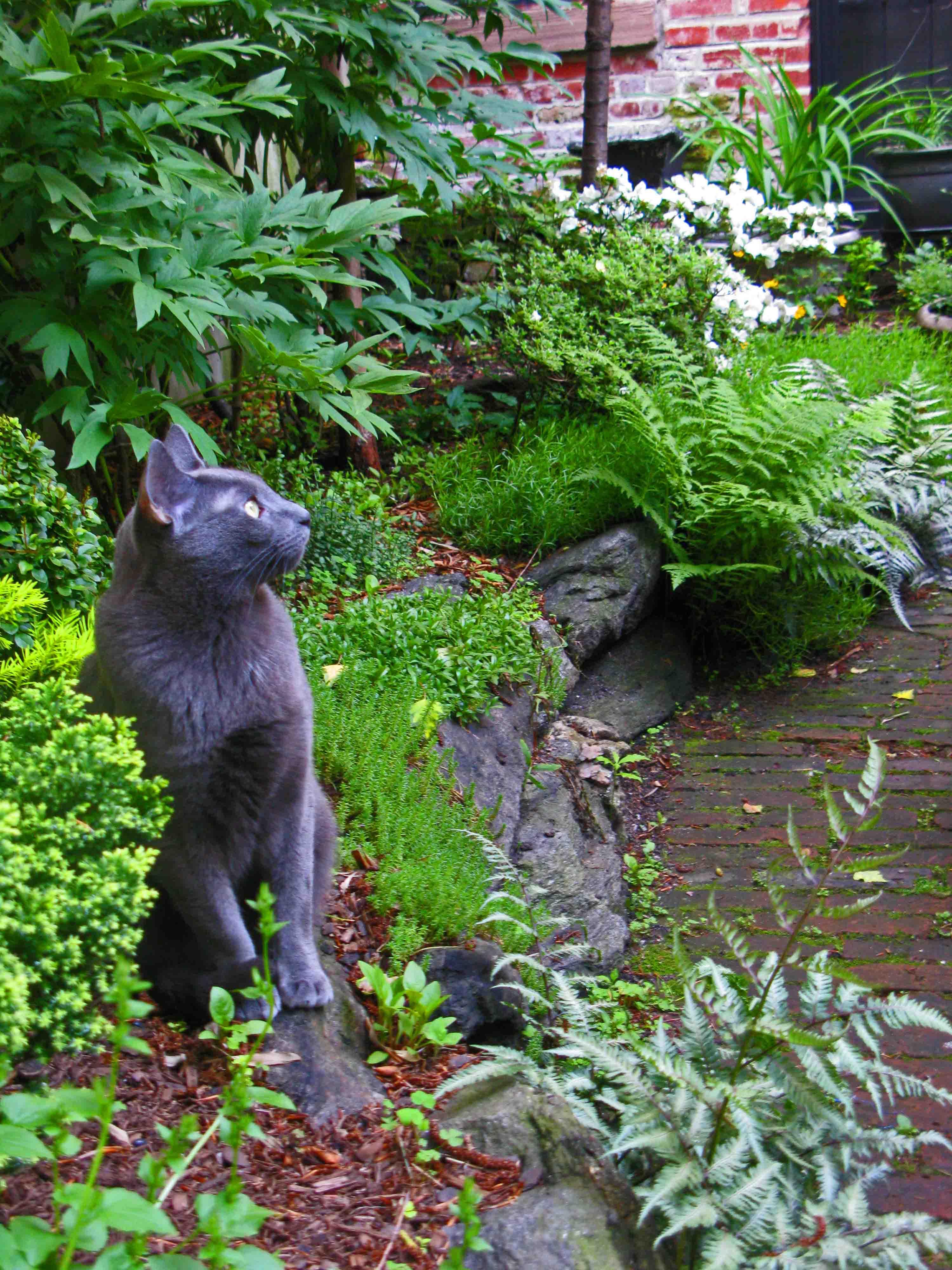 outdoor animals gallery dogs plasterwareintagliosmouldsplaques interiors craft uk cats plaster statues garden ornaments statue cat home decoration figurines