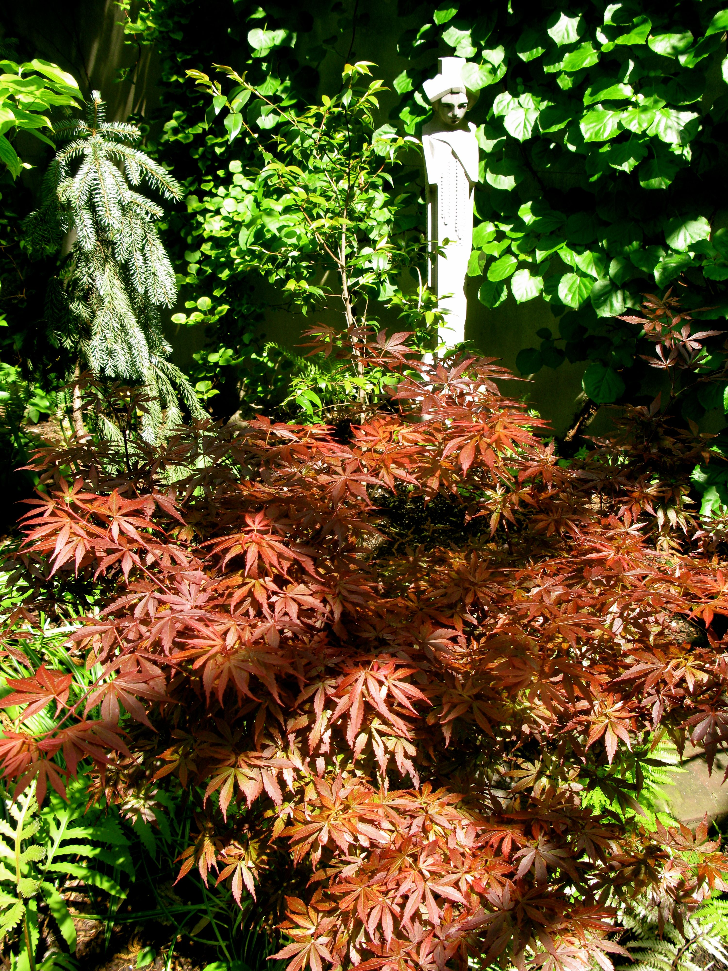 March Of The Japanese Maple The Story Of Elizabeth Matthew Gallaway