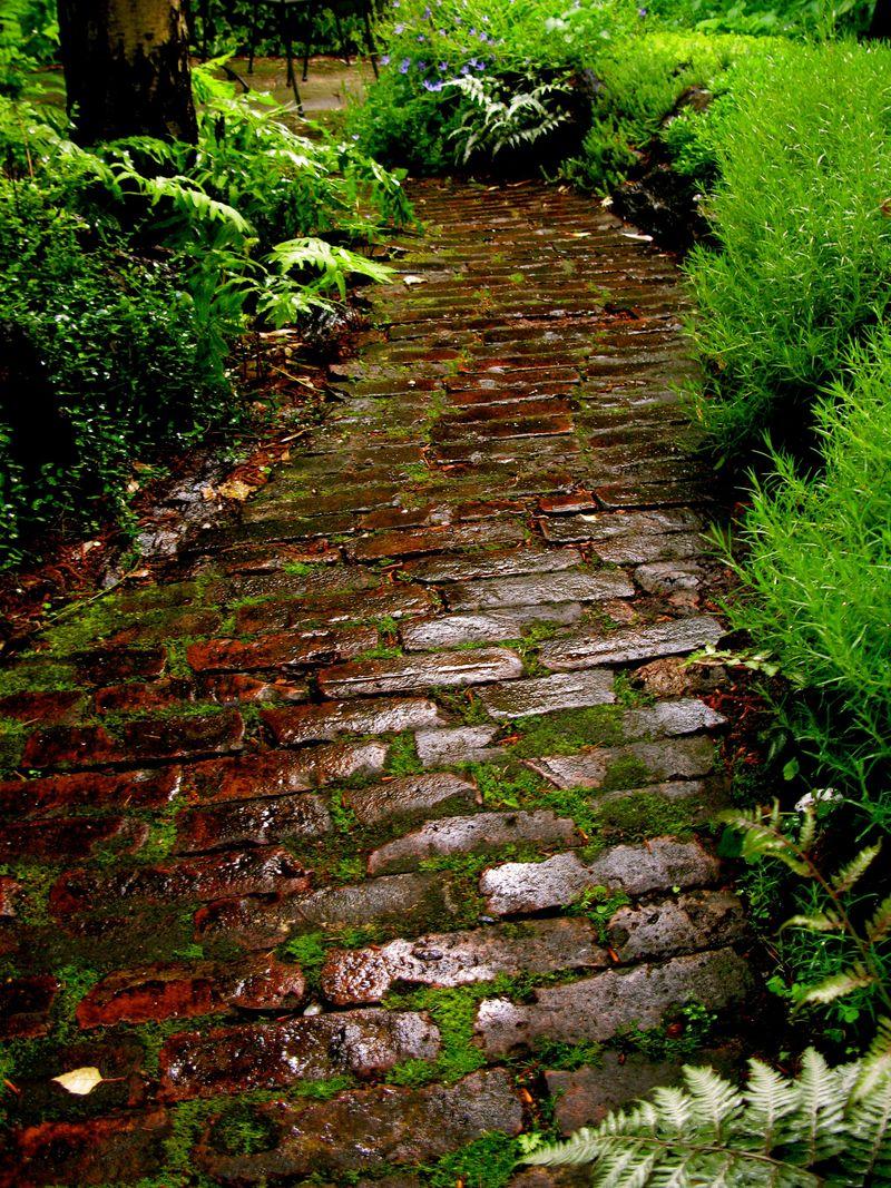 The Garden Project (Twilight and Campanula) - Matthew Gallaway
