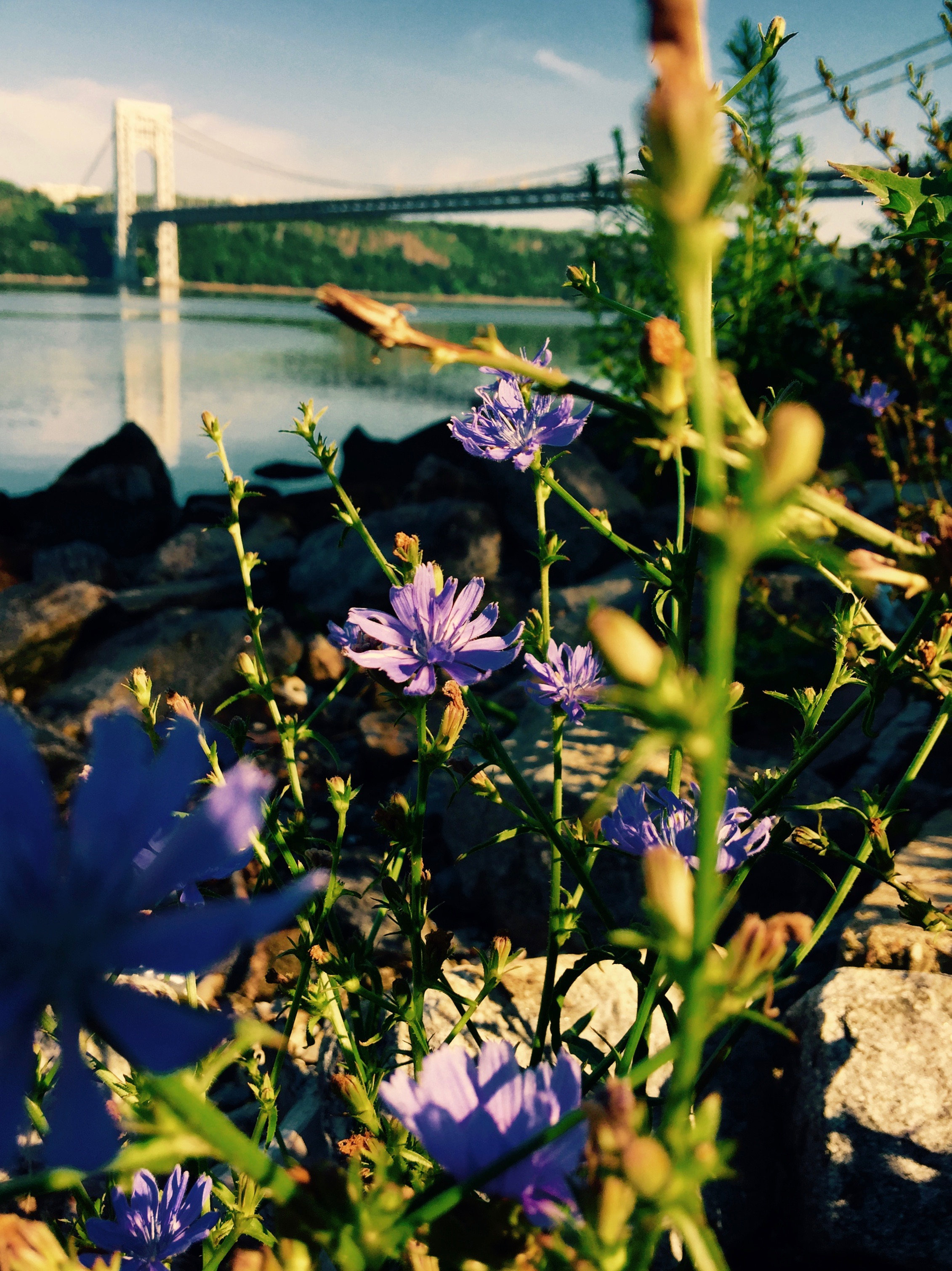 Hashtag gods stray cats and heather gardens are all symbols in as is the world of purple wildflowers found in the rocks and grass along the riverbank biocorpaavc Choice Image